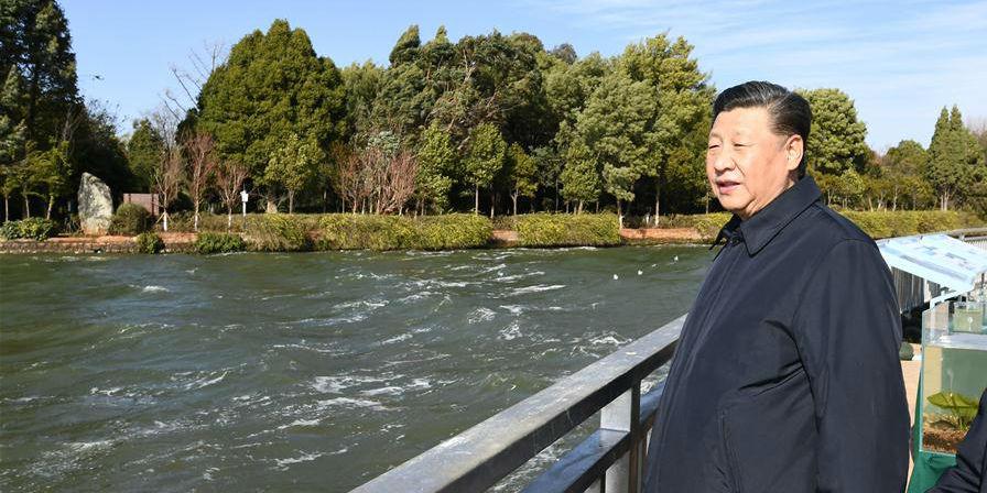 Xi inspeciona pântano ecológico do Lago Dianchi