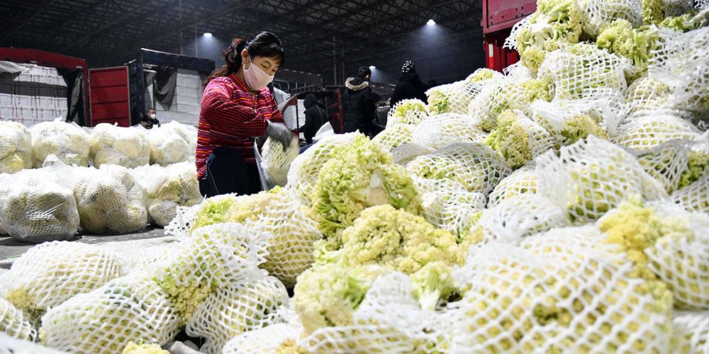 Cidade de Shouguang aciona plano de emergência para garantir fornecimento de vegetais