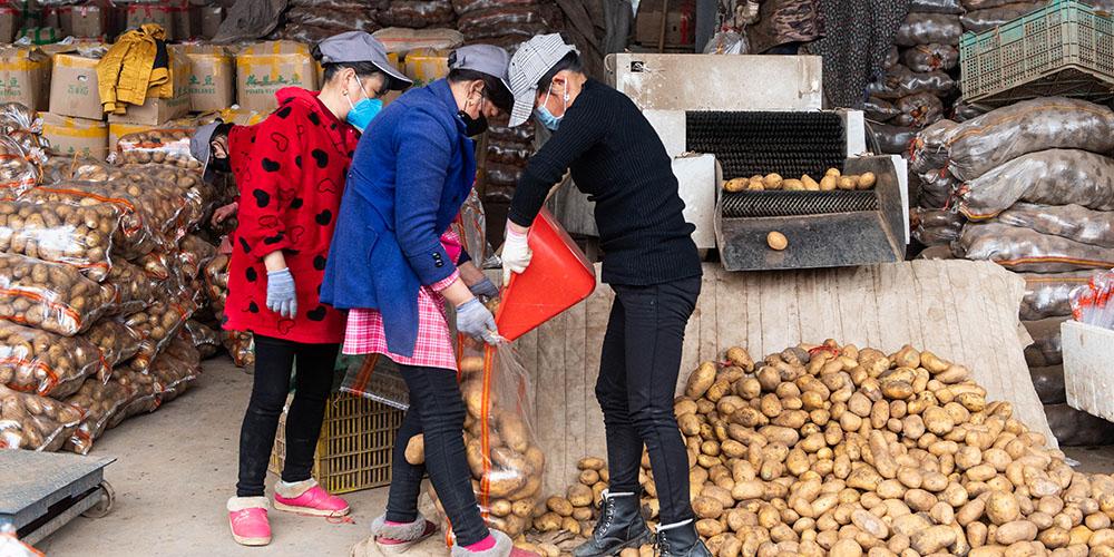Cidade chinesa de Changsha intensifica esforços para garantir fornecimento de vegetais