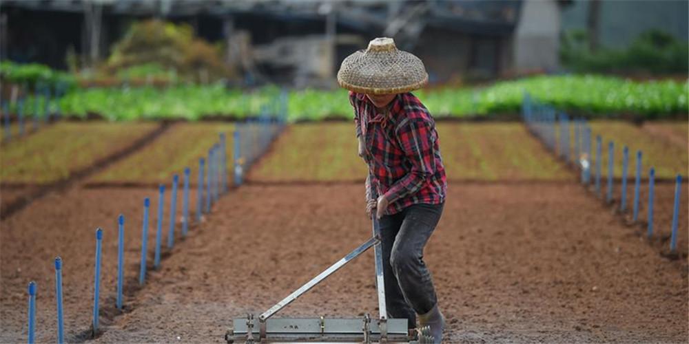 Agricultura da primavera em Haikou, sul da China