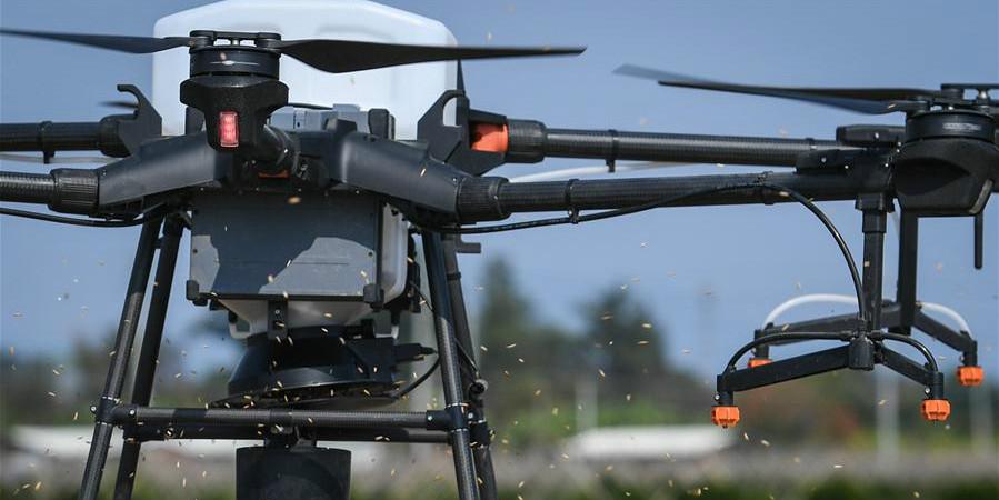 Cidade chinesa de Kaiping utiliza drones para lançar sementes de arroz