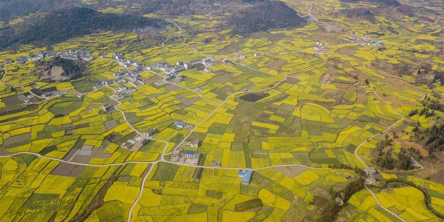 Cenário de flores de canola em Guizhou, sudoeste da China