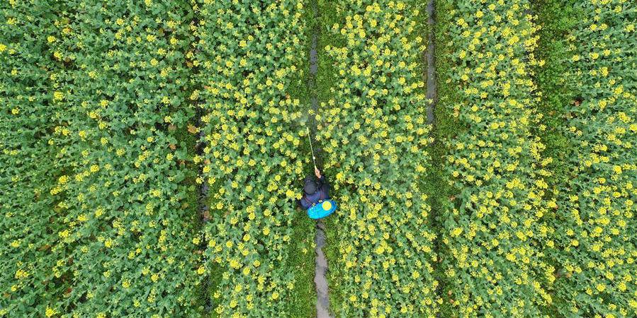 Fotos: Agricultura de primavera na China