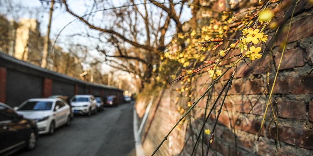 Fotos: Início da primavera em Beijing