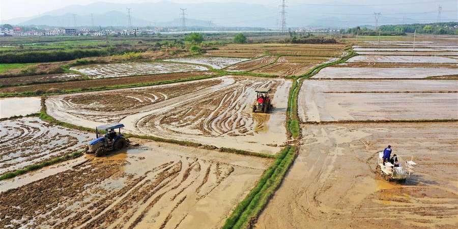 Agricultores locais trabalham em campo em Nanchang