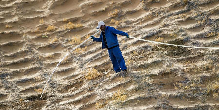 Moradores plantam hedysarum scoparium para conter desertificação na Mongólia Interior, norte da China