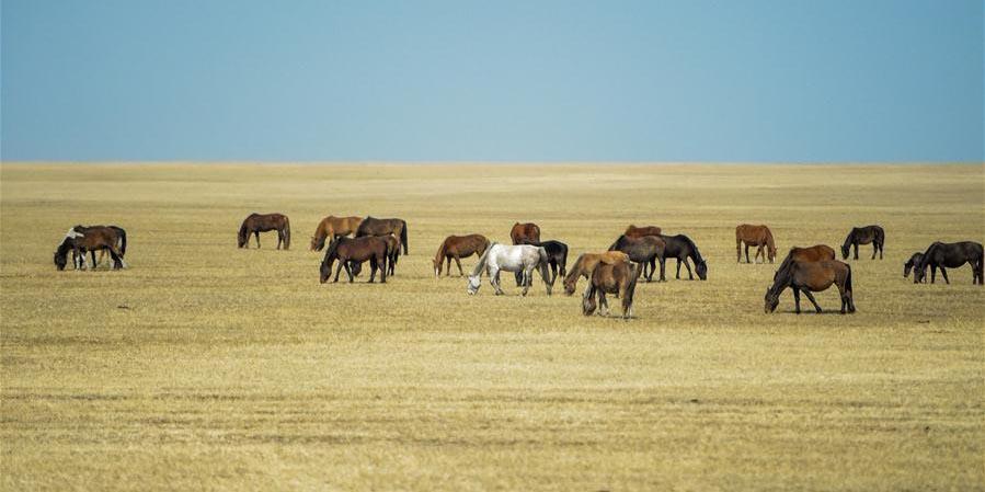 Cenário da primavera das pradarias de Hulun Buir na Mongólia Interior