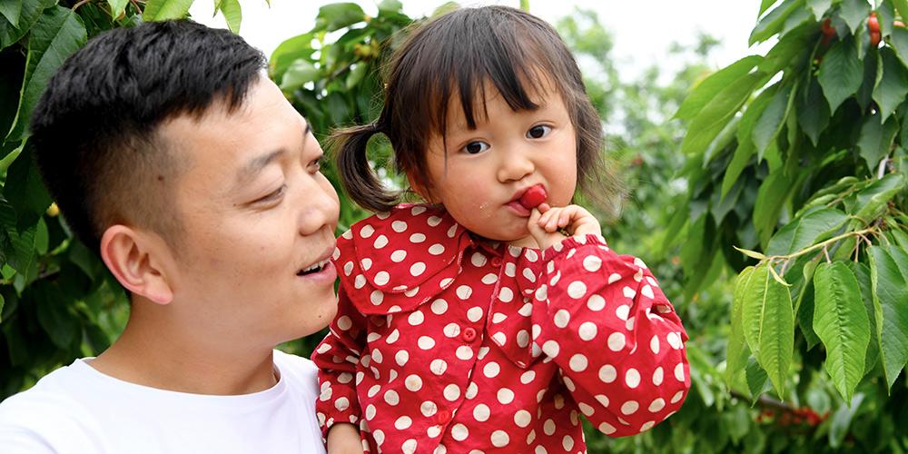 Festa da Cereja é atração na cidade de Zhengzhou