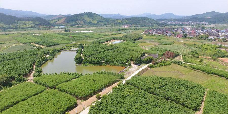 Indústrias verdes desenvolvem-se em Nanping, província de Fujian