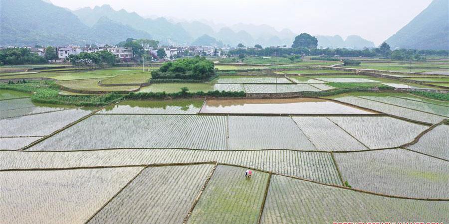 Fotos: agricultura de verão ao redor da China
