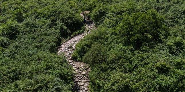 Fotos: projeto de restauração em andamento na antiga Rota do Chá e dos Cavalos em Sichuan