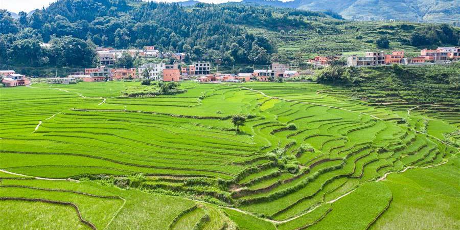 Paisagem de terraços em Guizhou