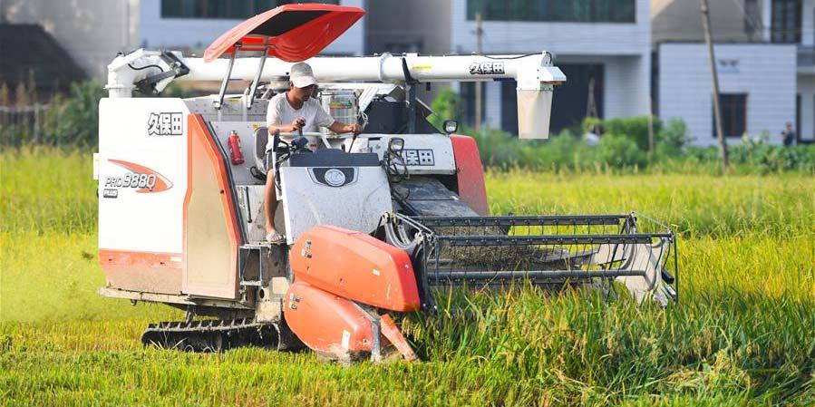 Agricultores colhem grãos secos na cidade de Yiyang, província de Hunan