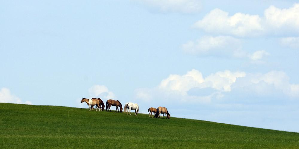 Fotos: paisagem de pradarias na Mongòlia Interior, norte da China