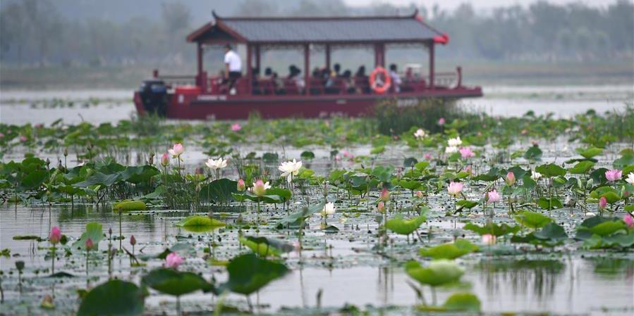 Ambiente ecológico melhora nas zonas ao longo do rio Qingzhang em Handan