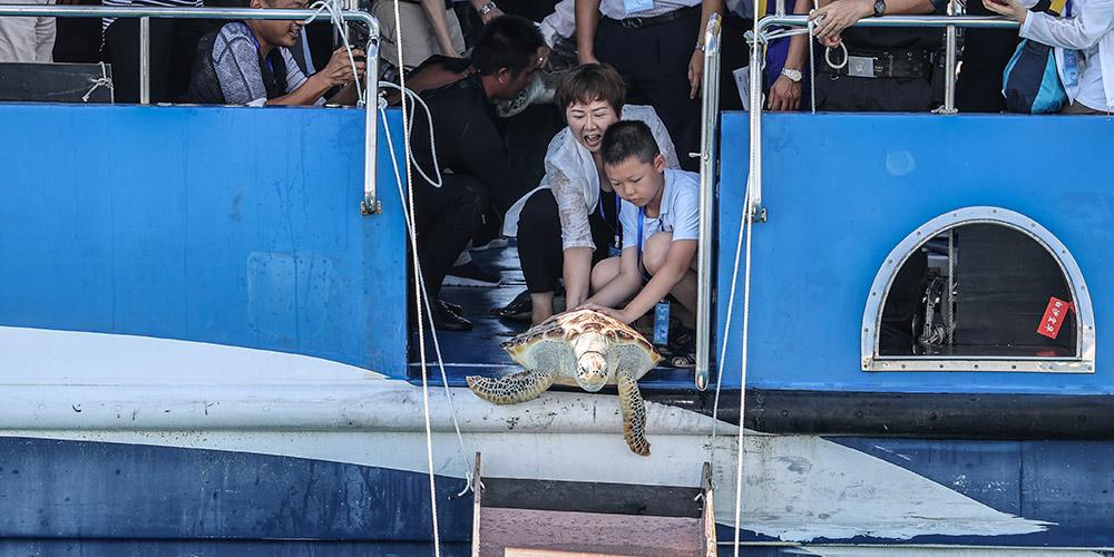 Tartarugas marinhas são devolvidas ao mar em Hainan