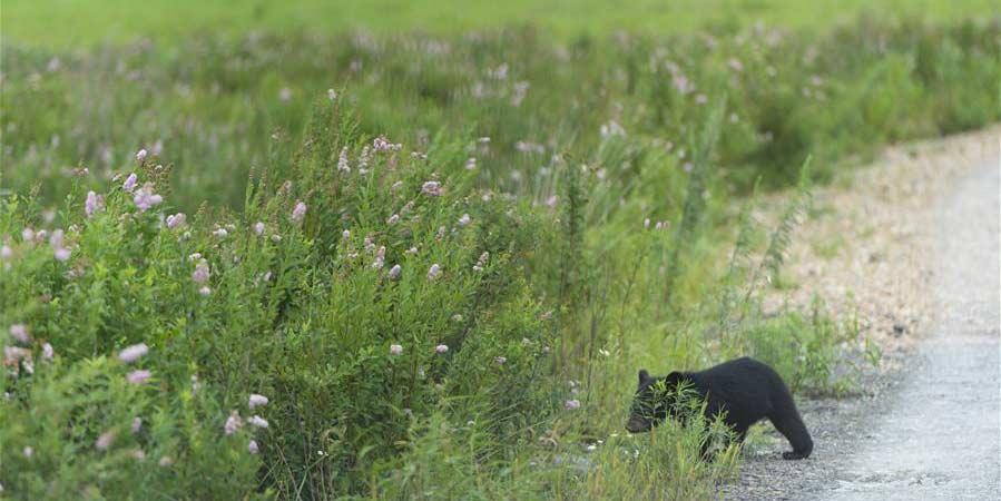 Fotos: parque de ursos na ilha Heixiazi em Heilongjiang