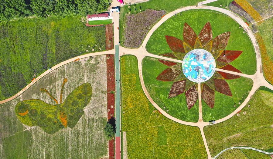 Fotos: campos de flores no ponto turístico ecológico de Lianhuashan em Jilin