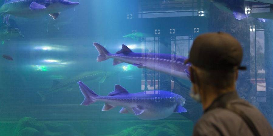 Turistas visitam museu de peixes em Heilongjiang