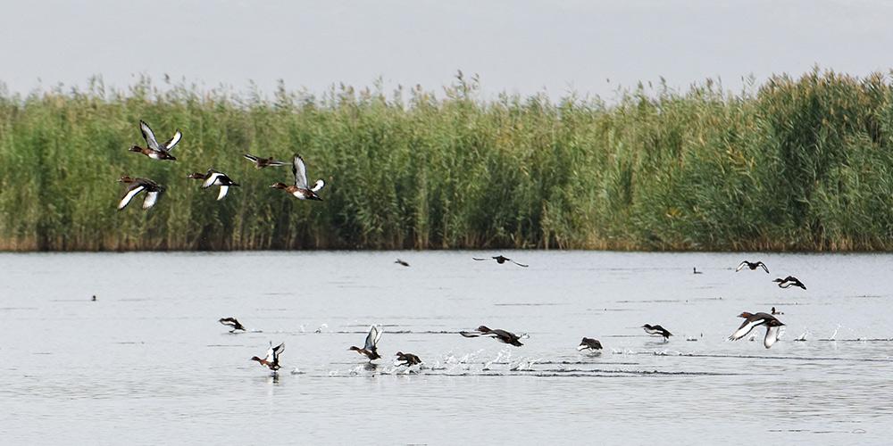 Fotos: lago Bostan no distrito de Bohu, Xinjiang