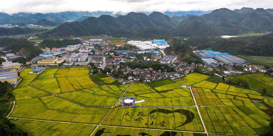 Vila da província de Zhejiang realiza festival para celebrar a colheita de arroz em casca