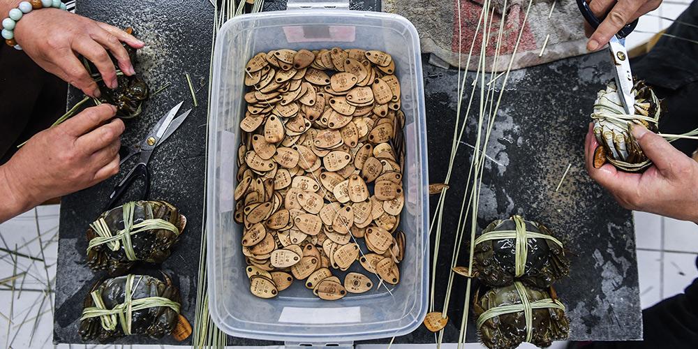 Está aberta a temporada de colheita de caranguejo em Huzhou