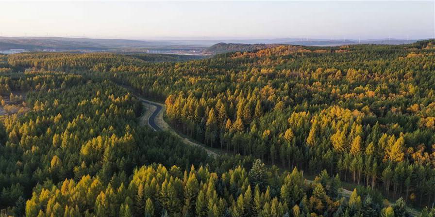 Paisagem de outono do Parque Nacional Florestal de Saihanba