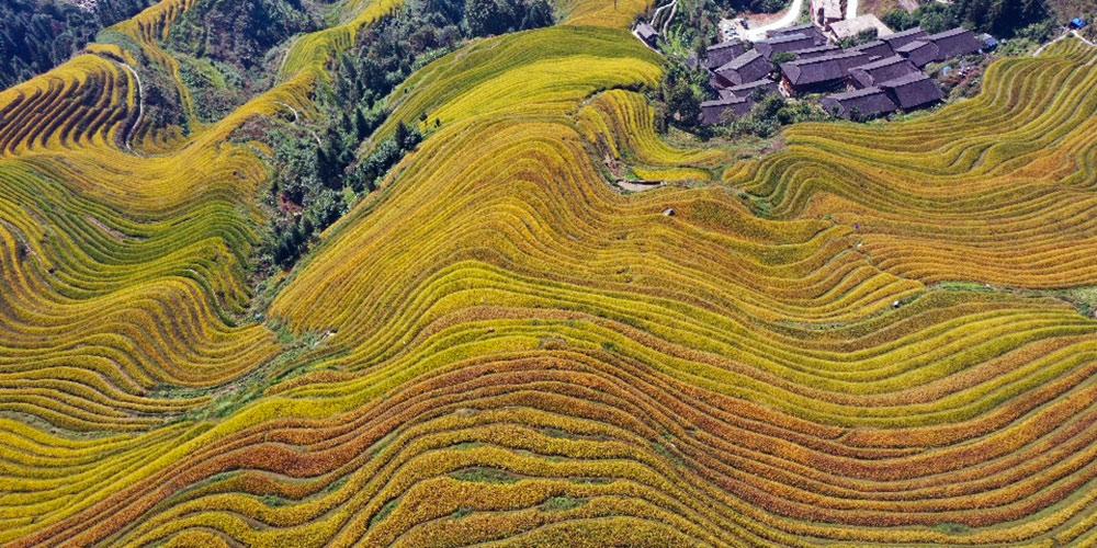 Vista aérea dos terraços de Longji em Guangxi
