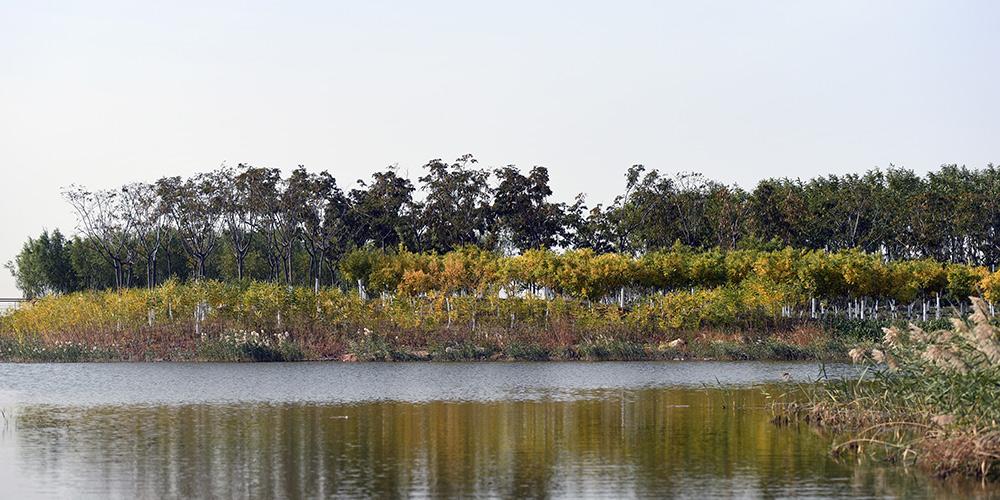 Paisagem de parque de pântano em Tianjin