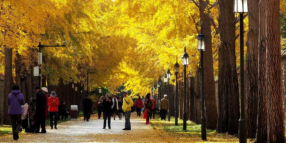 Paisagem de outono do Parque Yuanmingyuan em Beijing