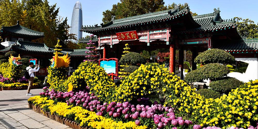 Vistantes apreciam crisântemos em floração em Jinan