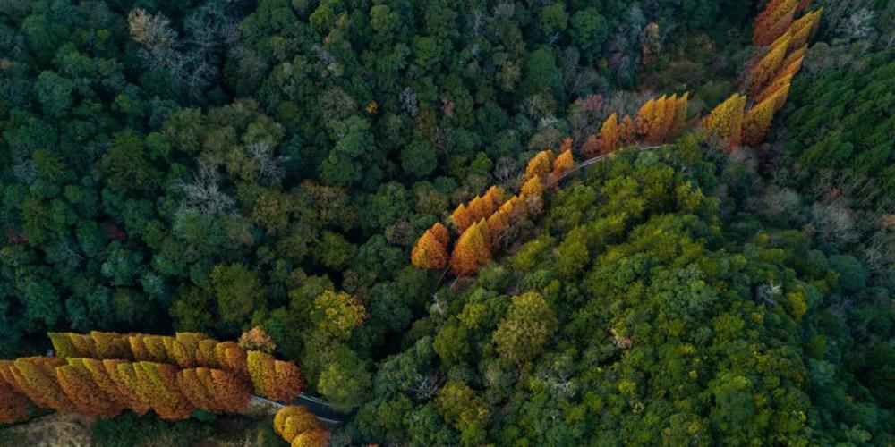 Paisagem da Reserva Natural Nacional da Montanha Longqi em Fujian