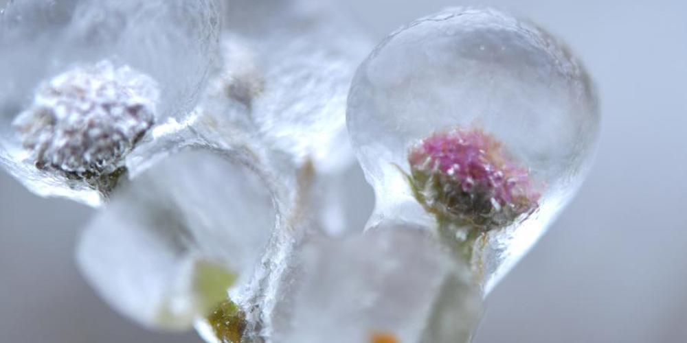Geada deixa plantas cobertas de gelo em Enshi, província de Hubei
