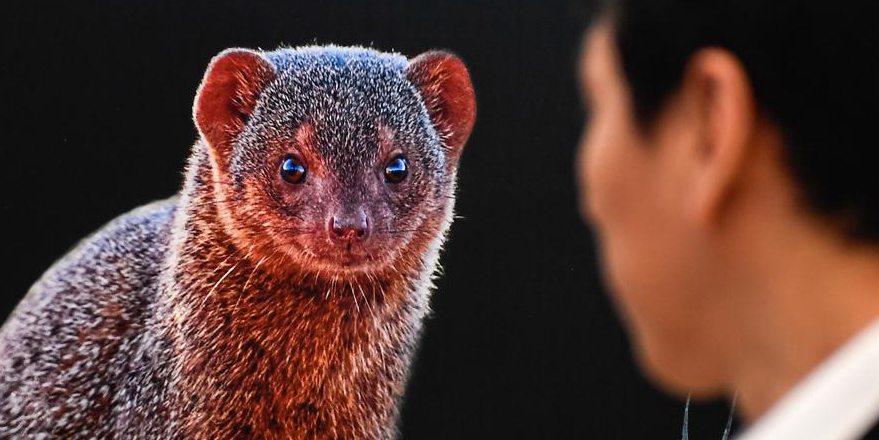Exposição de fotografia da vida selvagem começa na Biblioteca da Província de Jinlin