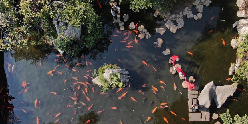 Paisagem do Jardim Qinghui na cidade de Foshan, província de Guangdong