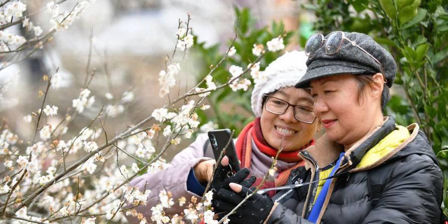 Visitantes aproveitam tempo de lazer em meio às flores de ameixa em Fujian