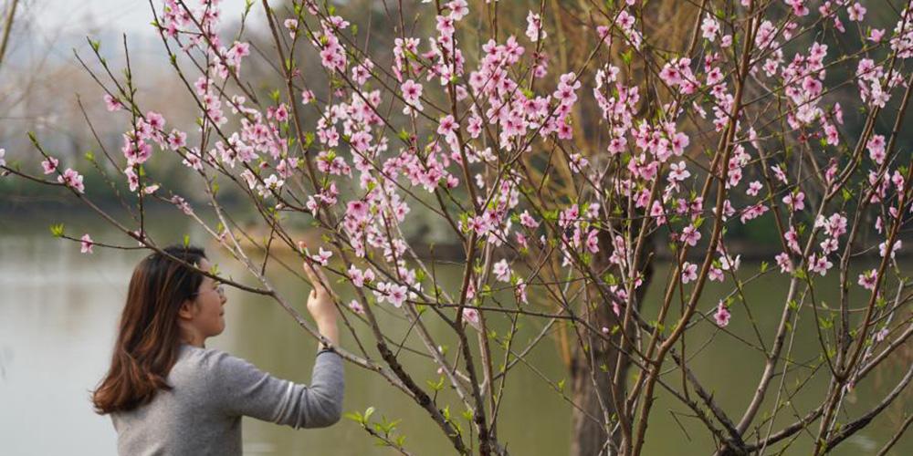 Paisagem de primavera na cidade de Nanchang