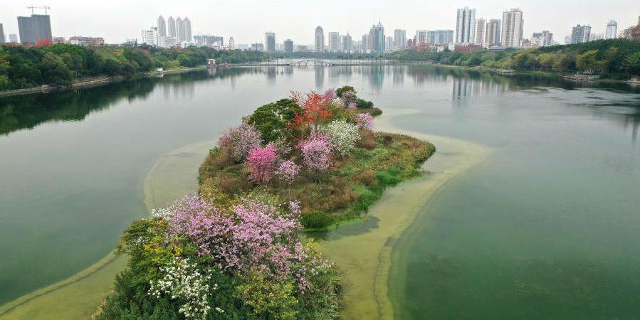 Plantas floridas em pequenas ilhas no meio do Lago Nanhu em Nanning