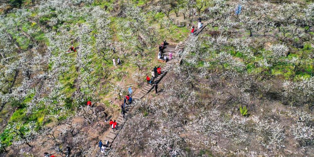 Pessoas apreciam a paisagem do início da primavera na aldeia de Yinhe em Chongqing