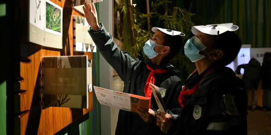 Alunos visitam o Museu do Panda Gigante de Chengdu