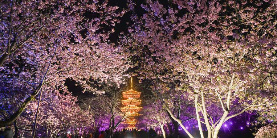 Festival das cerejeiras em flor começa em Wuhan