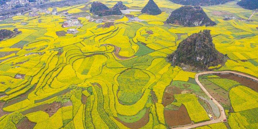 Jingzhe, o terceiro dos 24 termos solares, marca o começo do trabalho de aragem na primavera