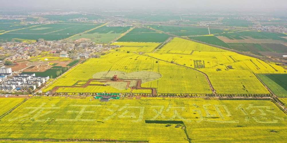 Pessoas apreciam a vista das flores de colza em Henan