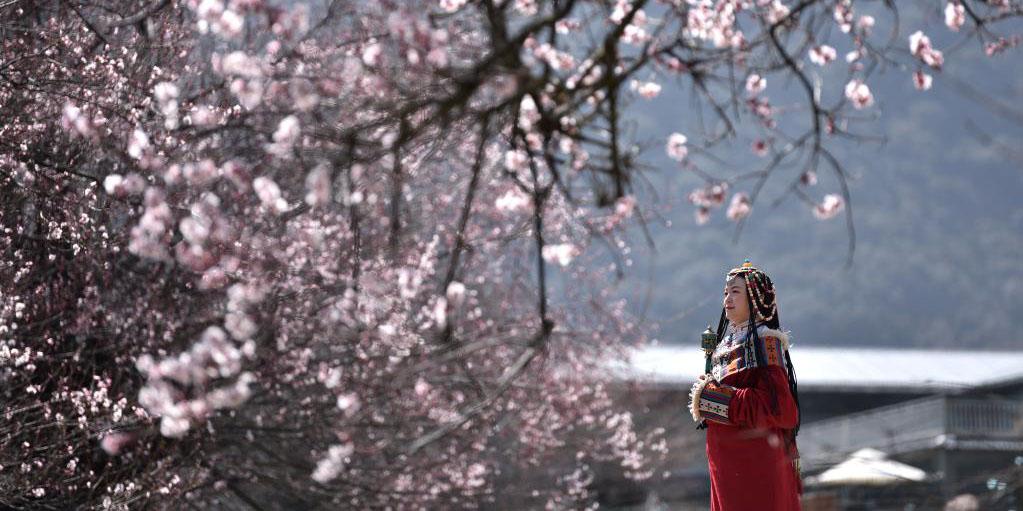 19ª festa do pessegueiro em flor começa em Nyingchi no Tibet