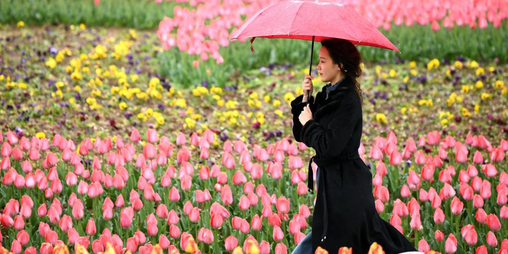 Jardim Botânico de Xi'an realiza exposição das flores de primavera