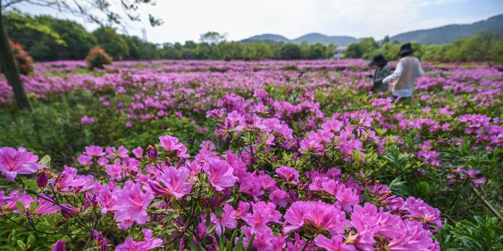Primavera encanta com flores e cores variadas em Changxing